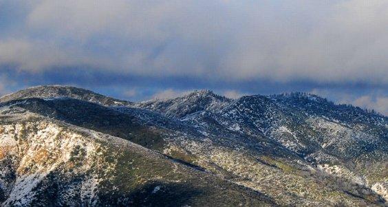 3471 Snowy Trees