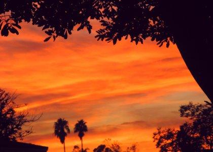 0967 Sunset Tree