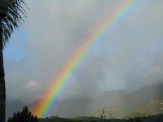 1023 Rainbow Delight