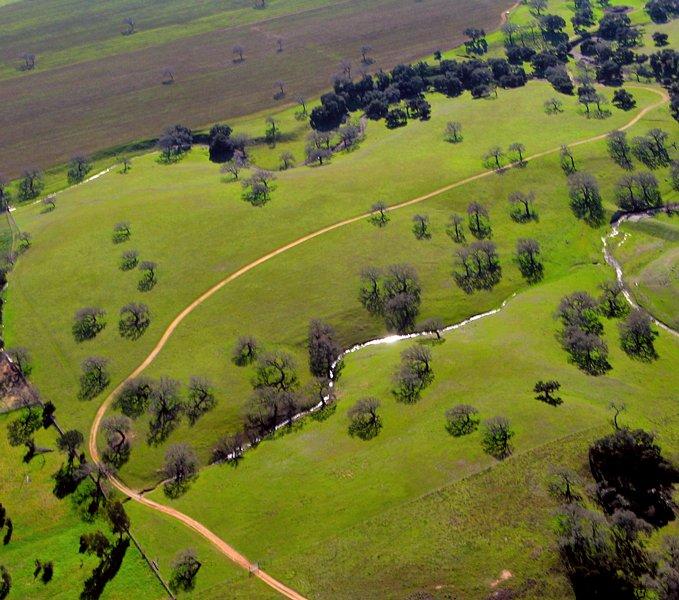 1259 Herd of Trees