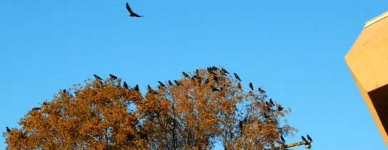 5310 Crow Congretation