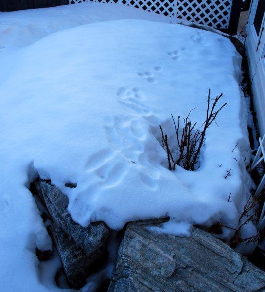 5683 Bunny Trail