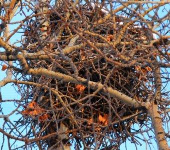 5742 High Nest
