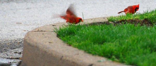 7440 Cardinal Point