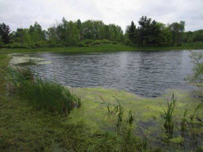 0710 Quiet Pond