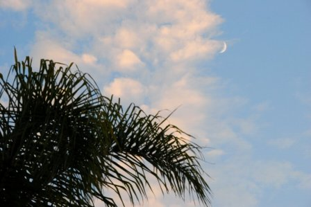 1602 Desert Moon