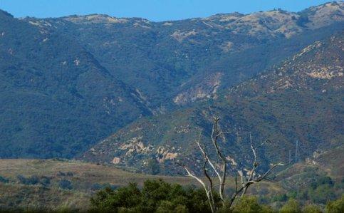 2400 Tree Diminished