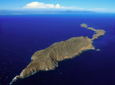 2636 Anacapa Island Croc