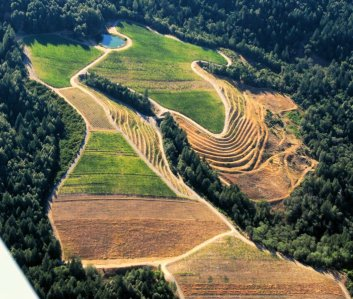 3433 Agro Mosaic