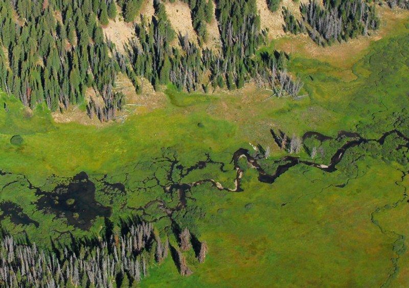 4109 Salmon River Headwaters