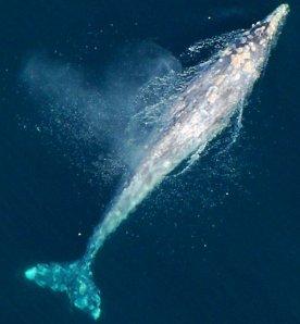 0987 I Was a Whale