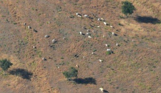 0130 Mixed Livestock