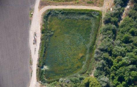 1231 Filet Pond