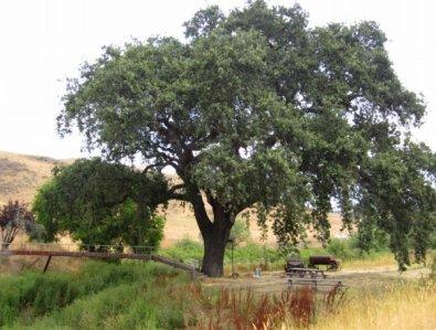 0102 Wise Tree