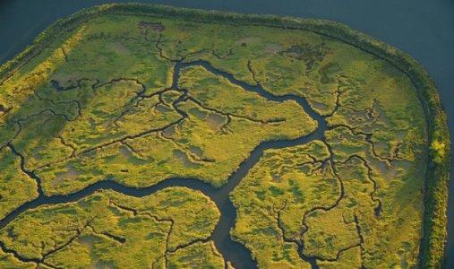 1716 Wetland Wonder