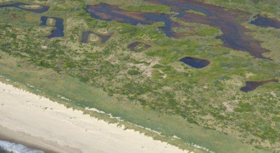 3447 Dune Grasses & ???