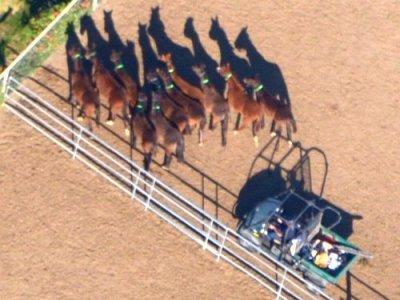 4727 Cart & Horses