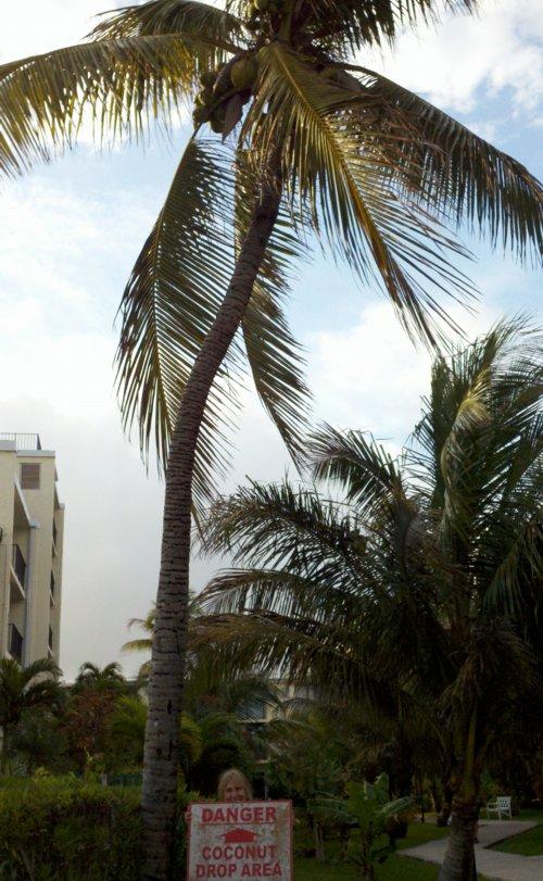 26_1 Coconut Zone