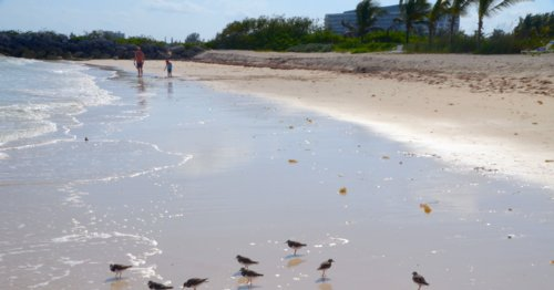 1220 Beach Gathering