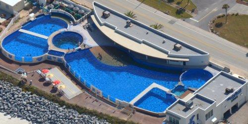 1641 Dolphin Pools