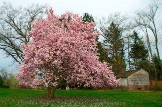 2806 Magnolia Magnificent