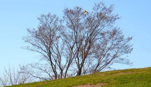3867 Kite & Tree