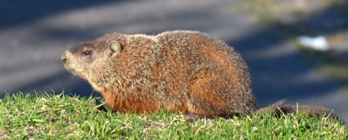 3869 Groundhog & Forecast