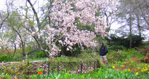 0767 Shakespeare Garden