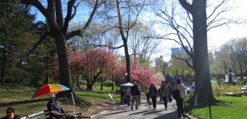 0872 Park Spring Enchantment