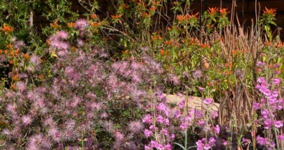 5102 Desert Blooms