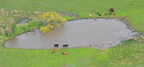 5682 Cow Heaven