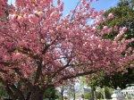 0533 Annapolis Spring