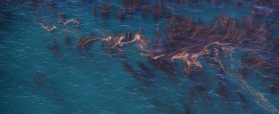 3604 Kelp Crown