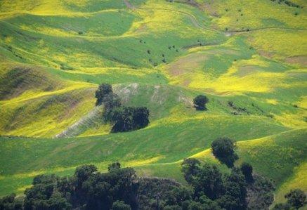 2466 Spring Hillside Palette