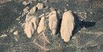 6055 Sun On Stone