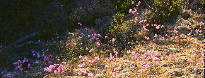 0584 Pink Slope