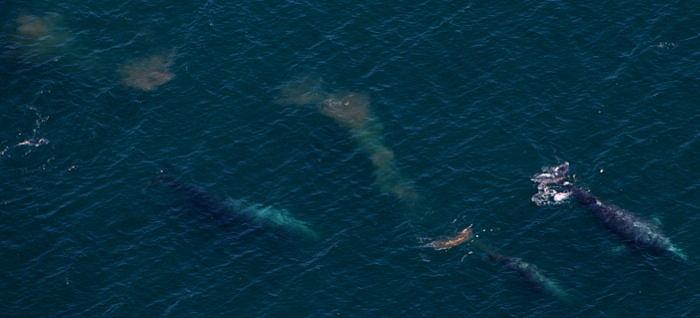 3569 Whale Blobs