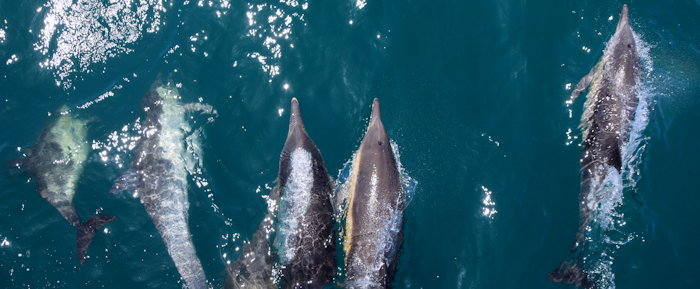 4978 Surfin' Cetaceans
