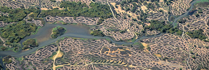 1602 Leopard Landscape