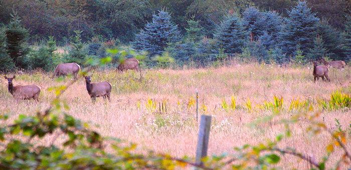2730 Serene Elk