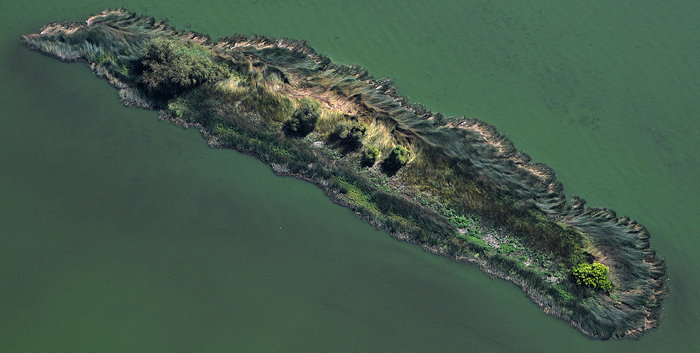 3209 Animal Island