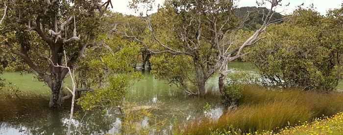 104828 Mangrove Swamp?
