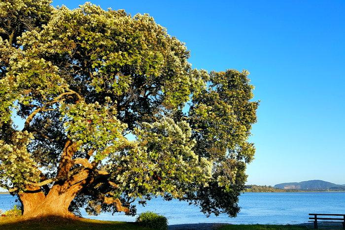 194414 Beach & Tree