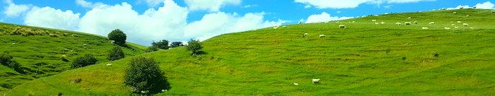 154505 Sheep Tracks