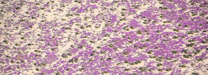 7108 Desert Bloom