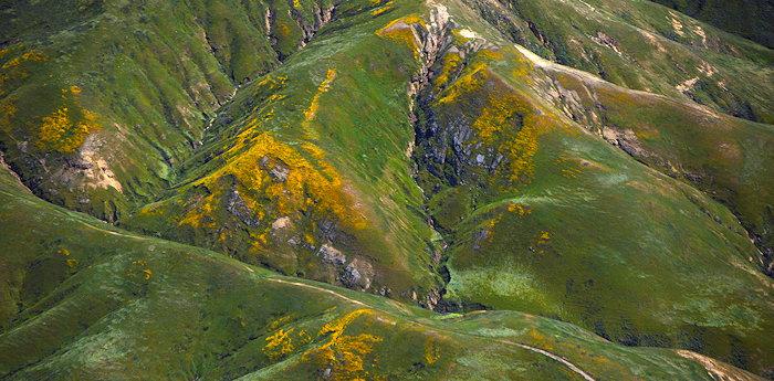 7779 Santa Rosa Blooms